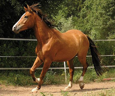 pferde ben tigen ausreichend magnesium. Black Bedroom Furniture Sets. Home Design Ideas